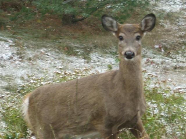 Deer at the door. [Photo by me, 2010.]
