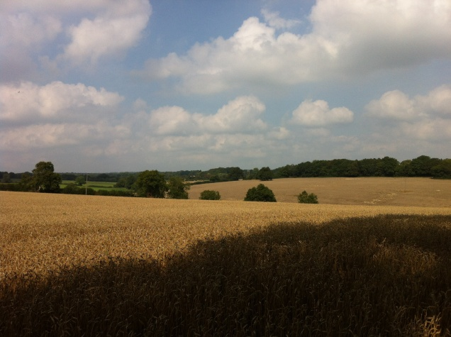 Farmland, Buckinghamshire, England. [Photo by me, 2014.]