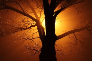 Free Stock Photo: A tree in fog at night.