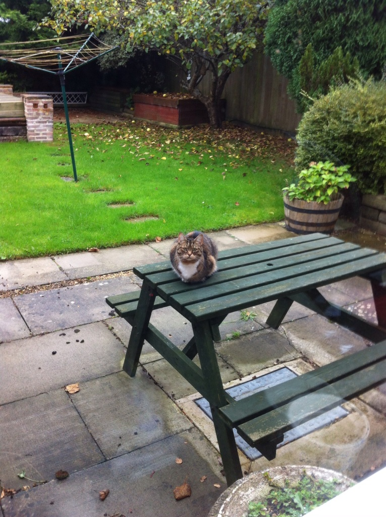 Unidentified cat on picnic table in our back garden. [Photo by me, 2014.]