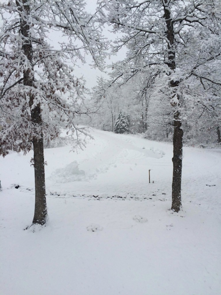 View from my parents' house yesterday. Pennsylvania, U.S.A., post-snowstorm.