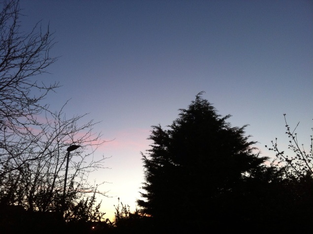Dawn breaking over our back garden in Wiltshire. [Photo by me, about 5:30 am this morning.]