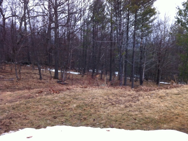 Still some snow out in the trees. Catskills. [Photo by me, 2015.]
