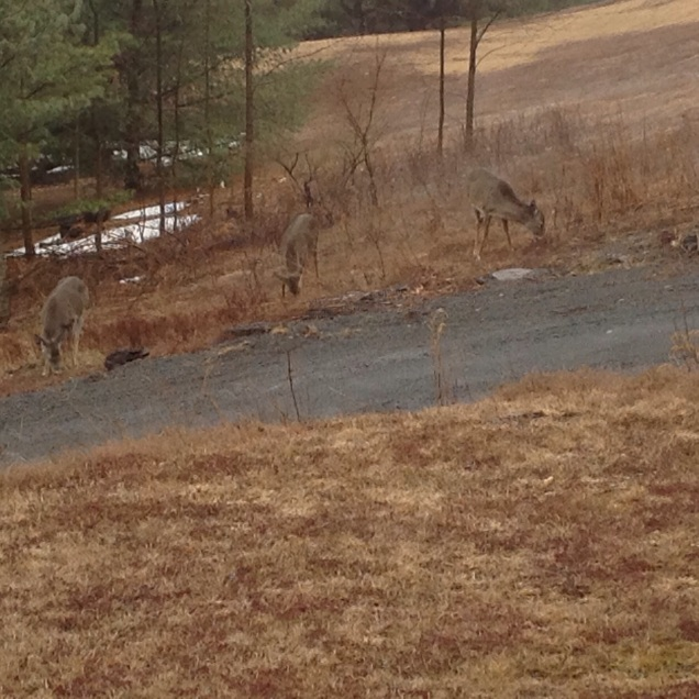 Across the driveway. Catskills. [Photo by me, 2015.]
