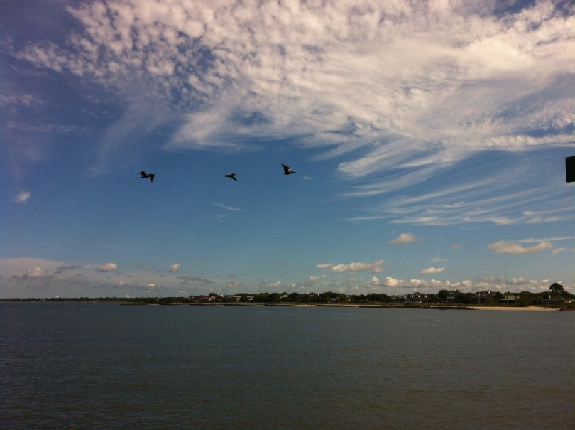 Pelicans over Charleston harbor. [Photo by me, July 2014.]