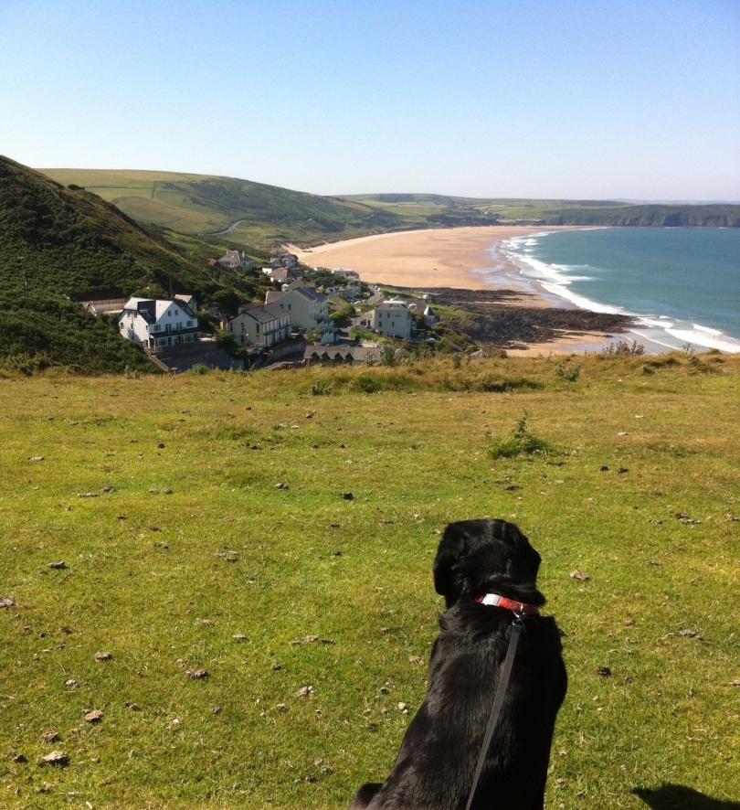 Hound's view. Devon coast. [Photo by me, 2015.]