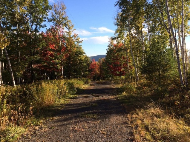 A part of our driveway, in the autumn trees. [Photo by Mrs. Nello, 2015.]