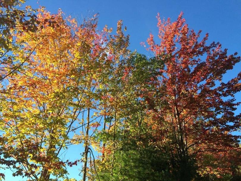 Autumn colors, the Catskills. [Photo by Mrs. Nello, 2015.]