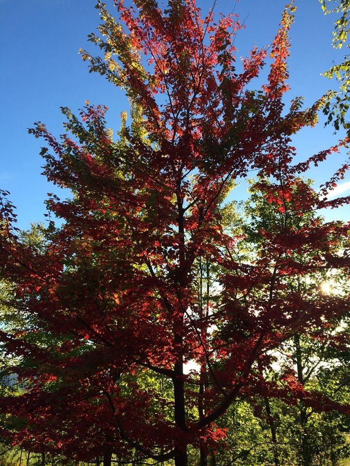 Autumn colors, the Catskills. [Photo by Mrs. Nello, 2015]