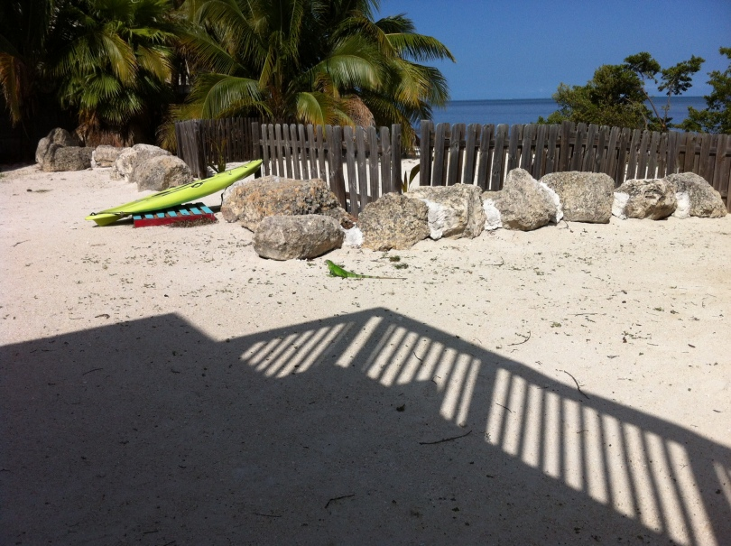 The beach behind our Marathon, Florida holiday rental, with an iguana meandering across it. [Photo by me, 2014.]