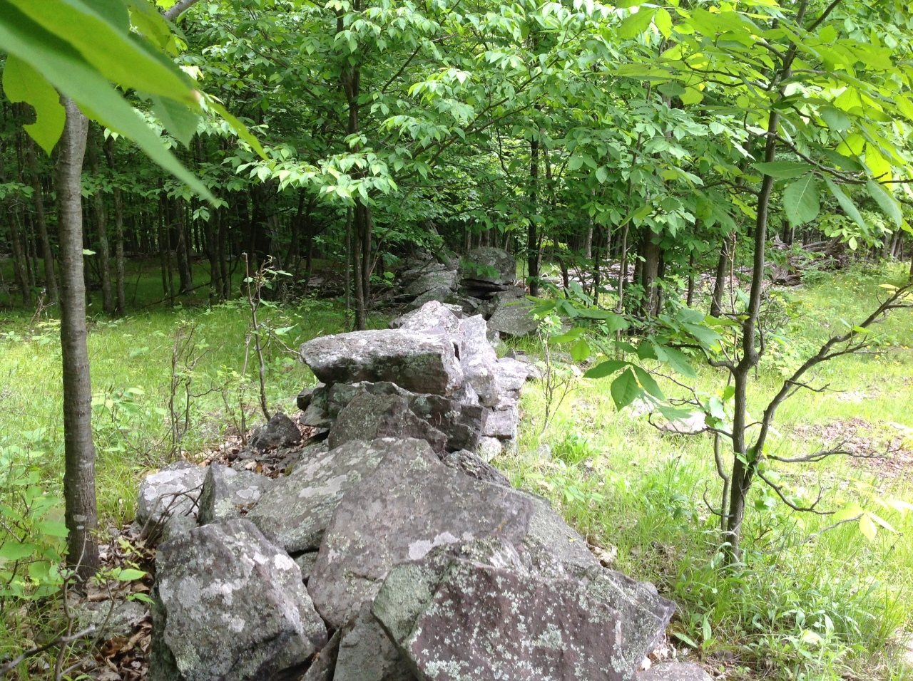 Along our stone wall. Catskills. [Photo by me, 2016.]