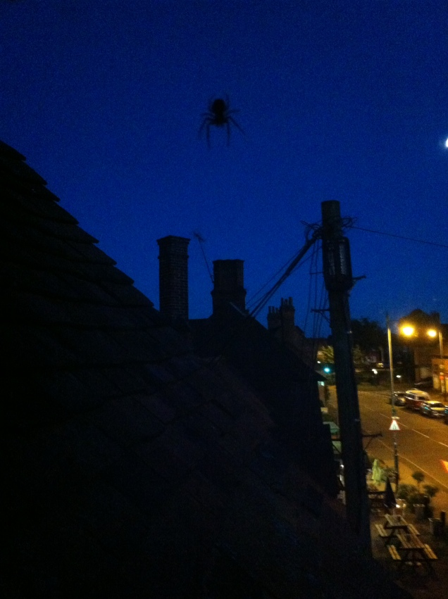 Photo of a small spider (well, maybe not that small) hanging outside my home office window the other night. [Photo by me, 2016.]
