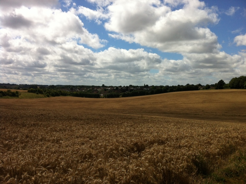 August photo of the Hertfordshire countryside. [Photo by me, 2016.]